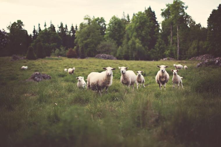 grass-lawn-meadow-animals