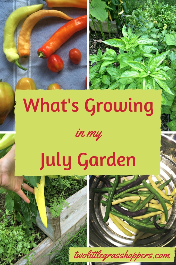 July is when all the hard work in your garden finally starts to pay off. Here's what I'm harvesting from my July garden.
